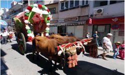 Marbella Feria Ochsengespann