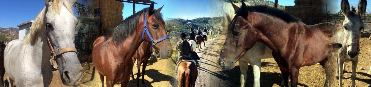 Reiten in Andalusien
