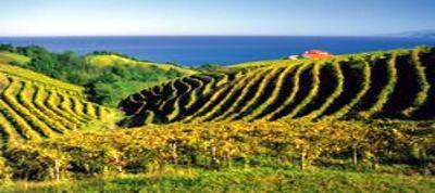 Bus-Rundreise Weingebiete Spaniens und Baskenland